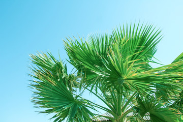 Beautifully stylish palm tree on nature shore of the sea background