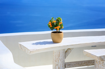 Mini orange tree on a white table in Oia, Santorini, Greece, Cyclades. The blue sea in background