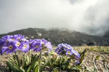 Himalaya Landschaft mit Blumen