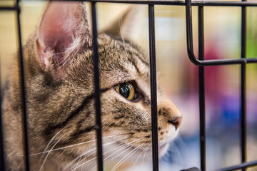 Closeup portrait of one young cat in a cage waiting for adoption