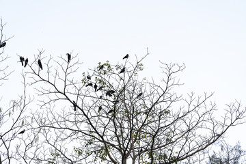 Birds on the naked branches.