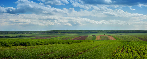 Wall Mural - landscape with agricultural crops a nd cloiudly sky