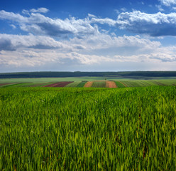 Fototapete - Wheat field and countryside scenery