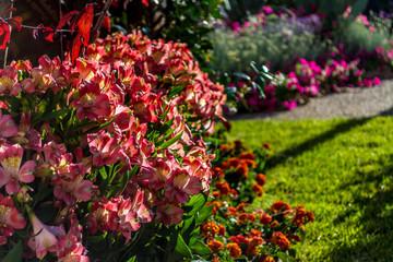 multicolored flower garden inside the city of Sassari