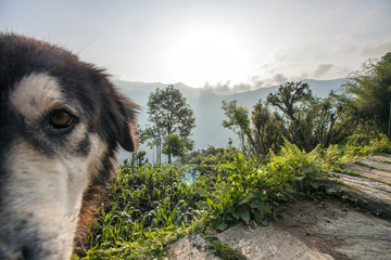 Landschaft Panorama Chandruk mit Hund