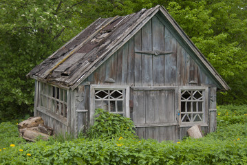 Very old barn with a ruined leaky roof against a background of green fresh foliage