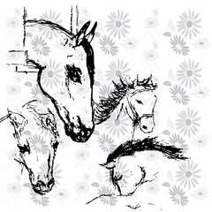 horses background