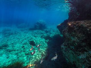 My Under Water World