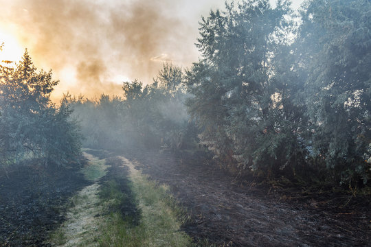 Forest wildfire. Burning field of dry grass and trees. Heavy smoke against blue sky. Wild fire due to hot windy weather in summer. Road to escape from disaster. Rescue way concept