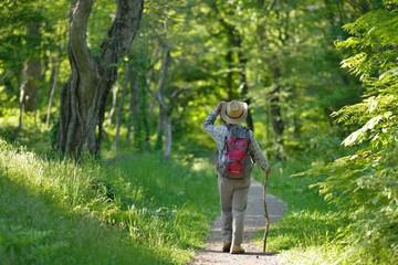 トレッキング・新緑の森を歩く