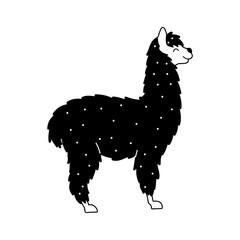 Vector illustration of cute llama