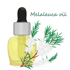 Melaleuca essential oil vector illustration Aromatherapy