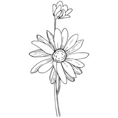 Daisy in a vector style isolated. Full name of the plant: Daisy. Vector flower for background, texture, wrapper pattern, frame or border.
