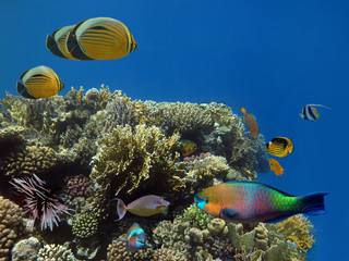 Corals reef and tropical fish