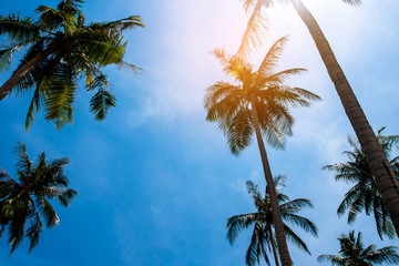 Coconut palm trees, beautiful tropical background