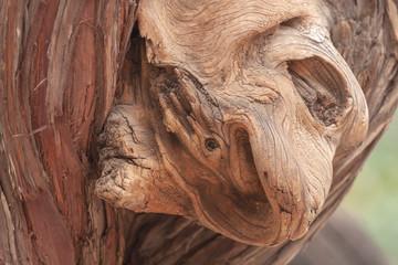 中国 樹のこぶが作り出す自然の造形美2