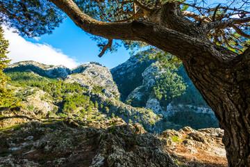 El Alcazar, Parque Natural de las Sierras de Tejeda, Almijara y Alhama, Andalusia, Spain