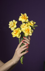 Women`s hands holding a spring bouquet of yellow daffodils