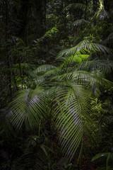 In a Jungle Maze