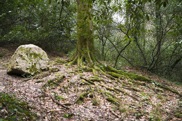 the massive roots of the tree