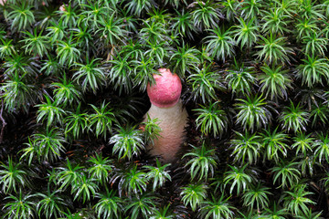 Pink mushroom on green moss background