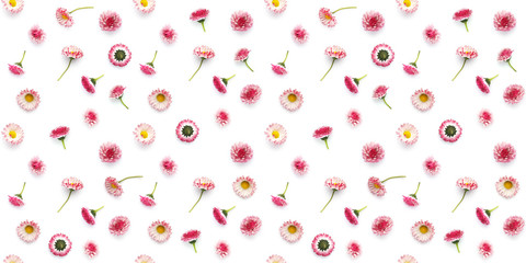 Fototapete - Seamless pattern from plants, wild flowers  isolated on white background, flat lay, top view.