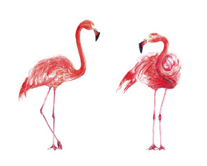 Set flamingo watercolor