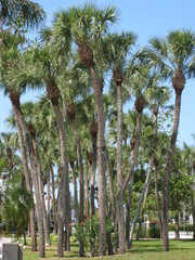 St. Armand's Drive Sarasota