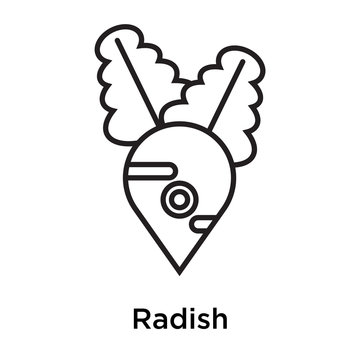 Radish icon vector sign and symbol isolated on white background