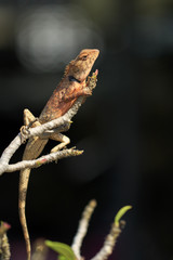 Image of a chameleon on tree branch. Reptile. Animal.