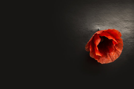 Red poppies. The concept of the Remembrance days