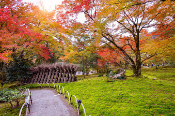 Fototapete - Colorful leaves in autumn. Beautiful park in Japan.