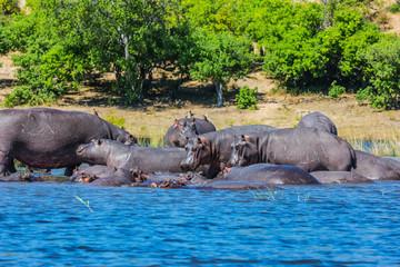 The tourism in Okavango Delta