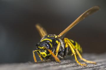 hornet 22