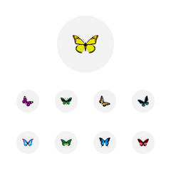 Set of moth realistic symbols with agrias claudina, summer insect, morpho aega and other icons for your web mobile app logo design.