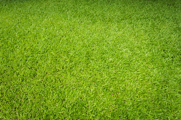 Tuinposter Gras Green sward texture for natural background