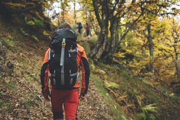 Back view of hiker wearing an orange jacket walking in a beech forest in autumn