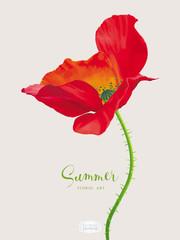 Luxurious bright red vector Poppy flower