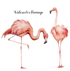 Watercolor two flamingo set. Hand painted bright exotic birds isolated on white background. Wild life illustration for design, print, fabric or background.
