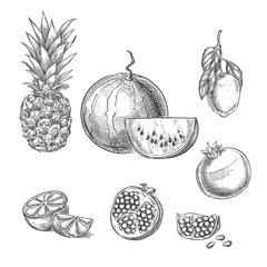 Tropical fruits sketch vector illustration. Pineapple, lemon, watermelon, pomegranate hand drawn design elements