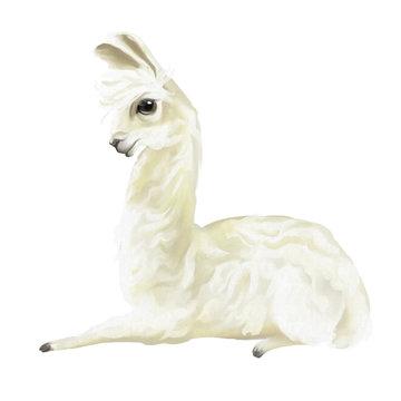 Cute hand painted mexican llama, alpaca