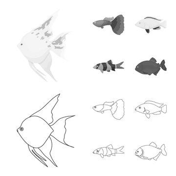 Botia, clown, piranha, cichlid, hummingbird, guppy,Fish set collection icons in outline,monochrome style vector symbol stock illustration web.