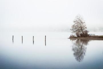 Tree reflection on a foggy lake Wall mural