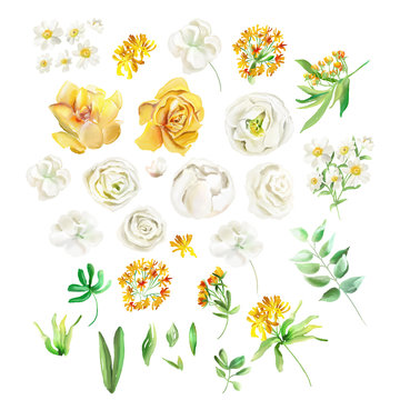 Beautiful watercolor flowers. Yellow flowers - roses, peonies, marigolds and camomille. Lush foliage and white roses. Isolated on white