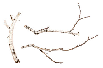 Birch branches isolated on white background. Natural decoration elements.