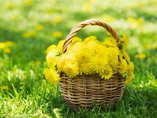 Dandelions in the basket