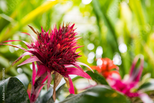 Hot Pink And Lime Green Tropical Spiky Flower Stock Photo And