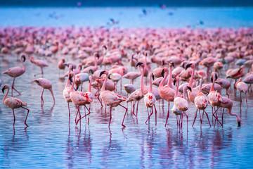 Kenya Africa. Flock of flamingos. African flamingos. Safari in Kenya. Pink birds. Wall mural
