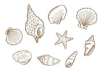 貝殻のイラストセット(茶色線)