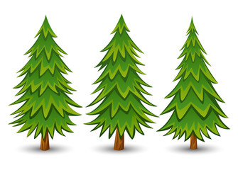 Green Pine trees set on a white background